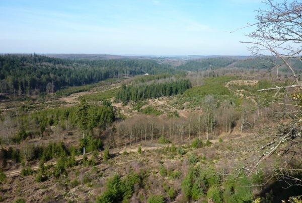 Déboisement Vosges